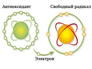 antioksidant